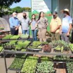 Prefeitura de Naviraí doa 117 mil mudas de hortaliças a 20 agricultores familiares